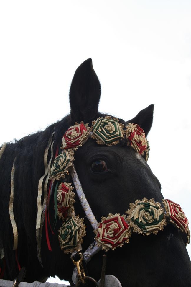 Zaumschmuck der Pferde