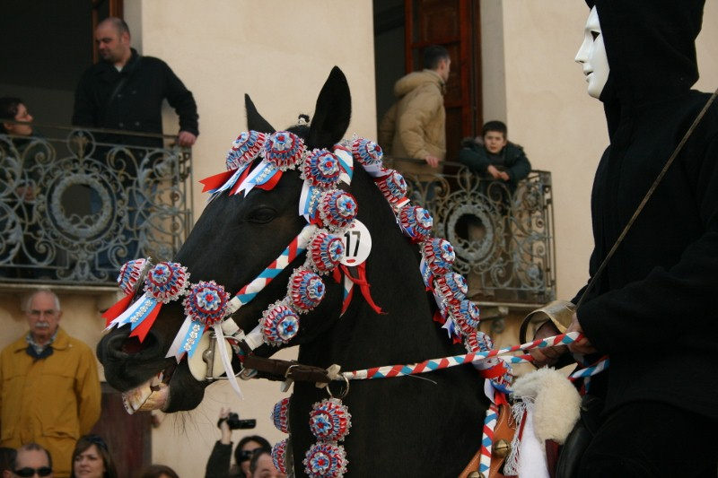 Erfahrenes Sartiglia-Pferd