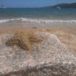 Seestern auf Stein