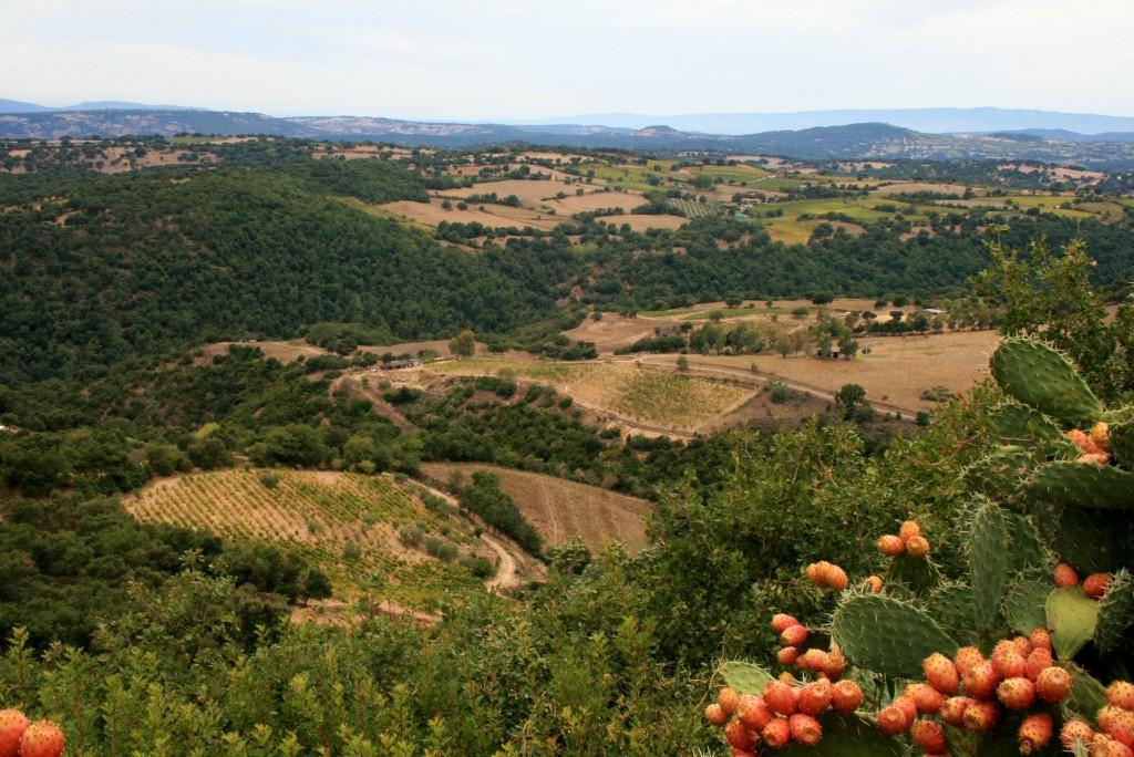 Weinregion Mandrolisai