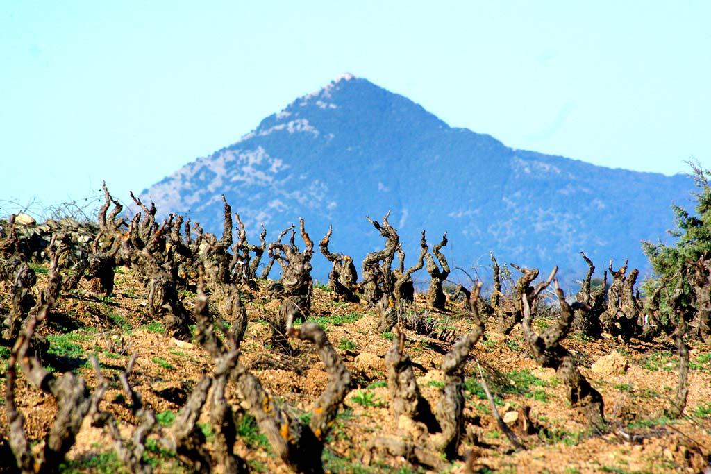 Sa Uprecada und Monte di Gonara - Foto: Sara Muggittu, Mamoiada