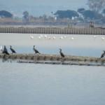 Kormorane und Flamingos