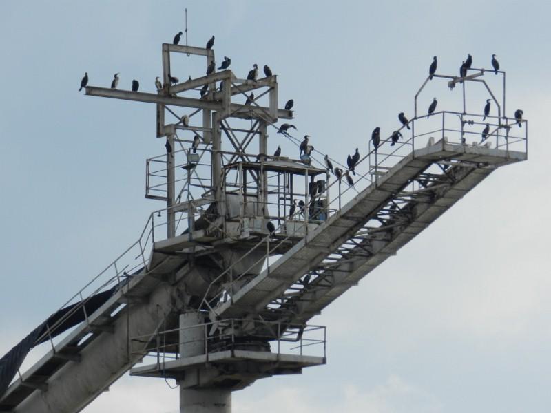 Vogelkolonie auf einem alten Kran