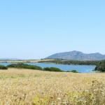 Weizenfelder neben der Lagune