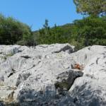 Silbergrauer Fels des Supramonte