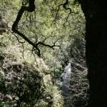 Wasser fließt überall im Dickicht
