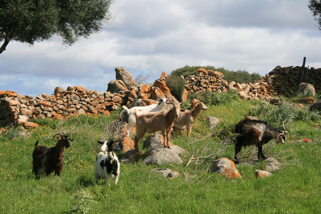 Landleben in der Gallura