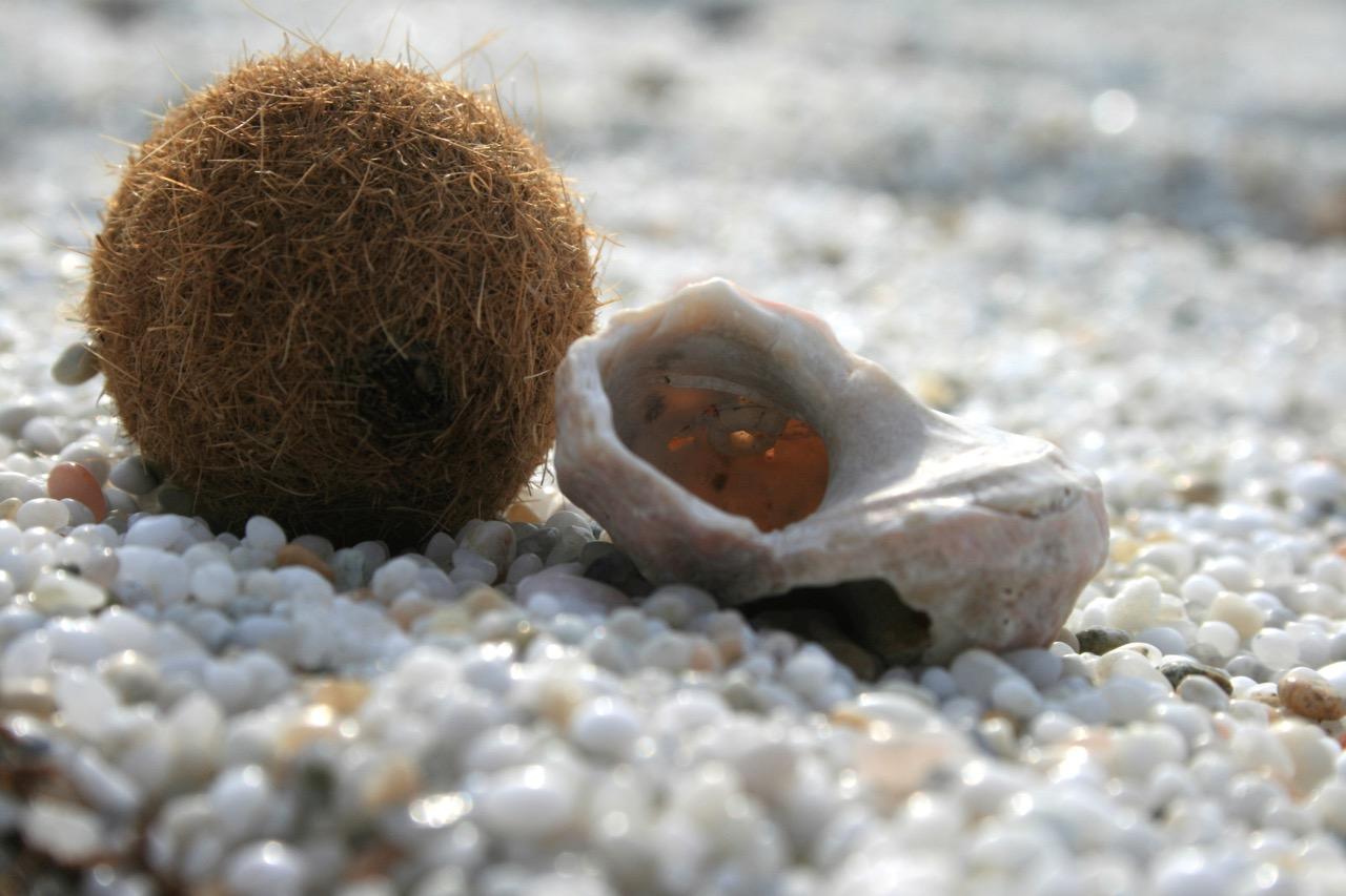Ein Ball aus Posidonia am Reiskorn-Strand von Is Arutas