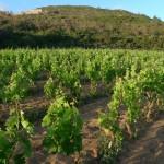 Weinhänge B&B Il Nido Sant'Antioco