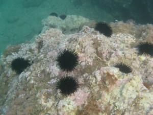 Ein Blick ins Meer - im Aquarium von Genua