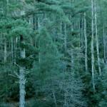 Dichte Wälder am Fuß des Gennargentu bei Seulo