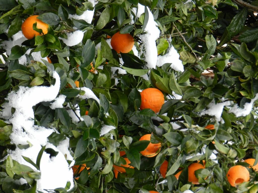 Winter: Schnee in den höheren Lagen ab ca. 800 Metern