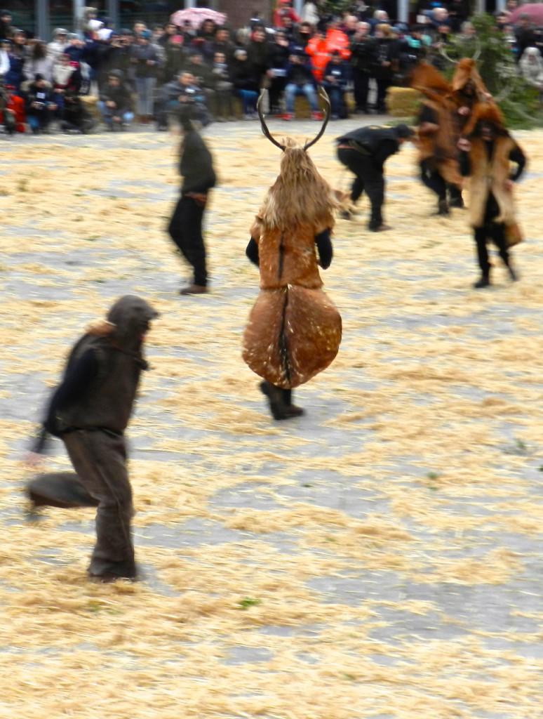 Hunde jagen Hirsche