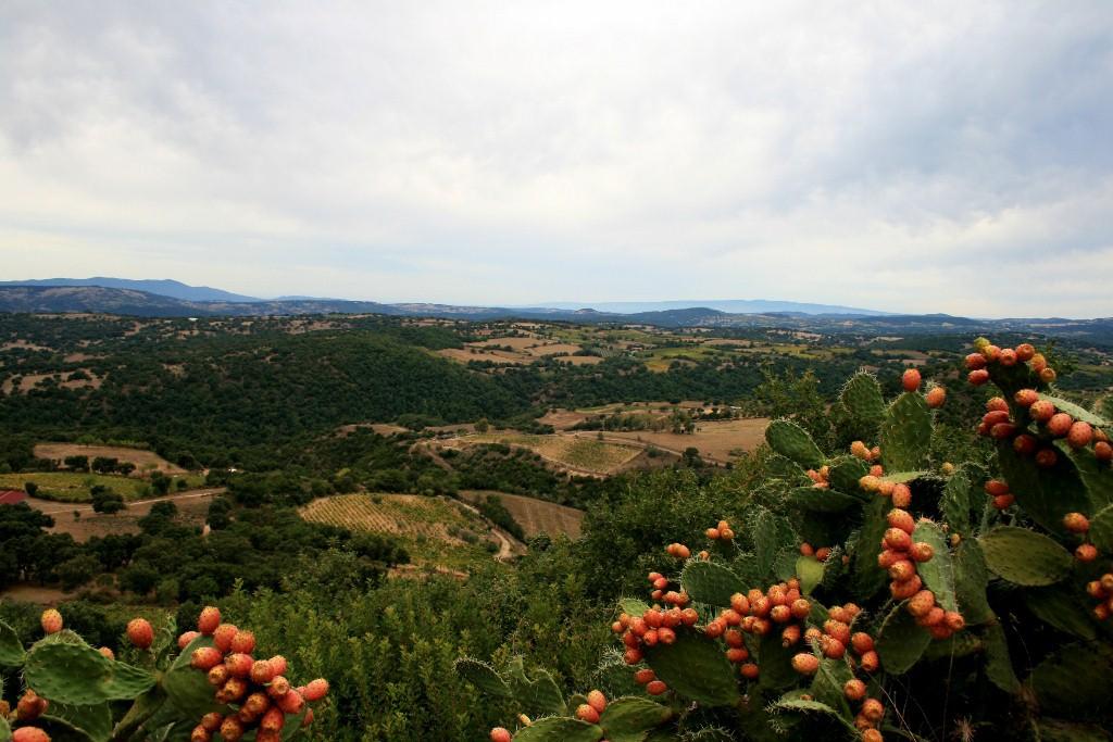 Geschenkte Zeit im Weingebiet Barbagia Mandrolisai