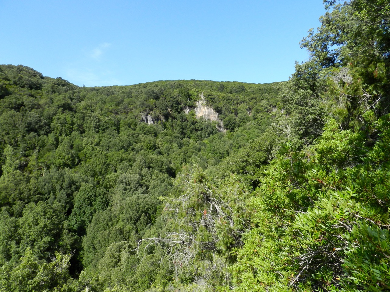 Grüne Wälder: Barbagia die Seulo