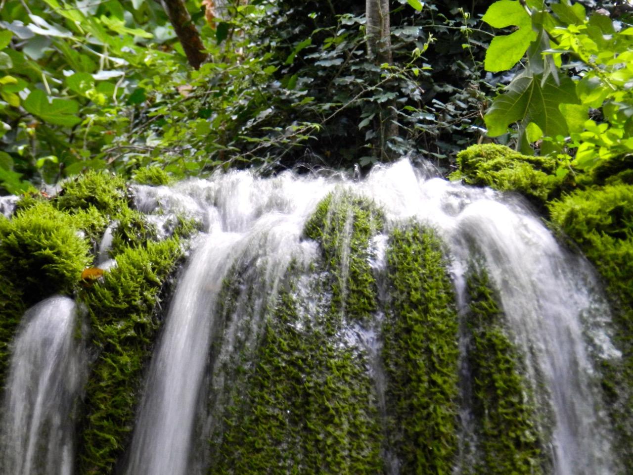 Überall Wasser und Grün