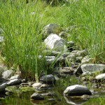 Idylle am Nebenlauf des Flusses Flumendosa