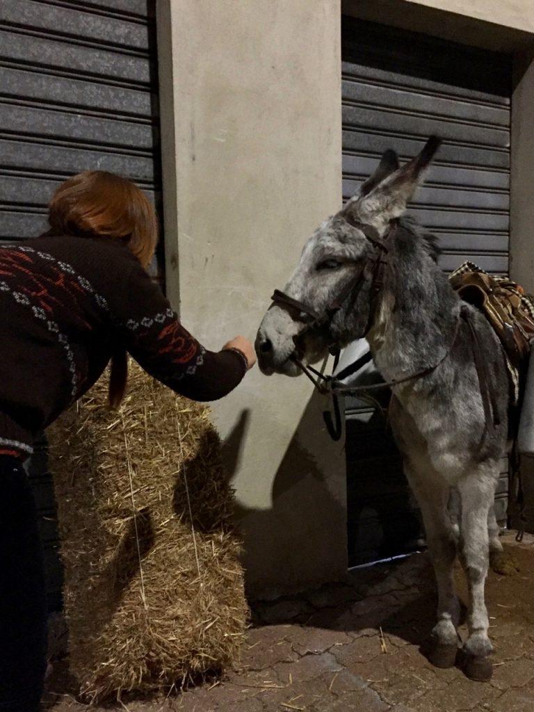 Esel auf dem Herbstfest in Fonni, etwas skeptisch