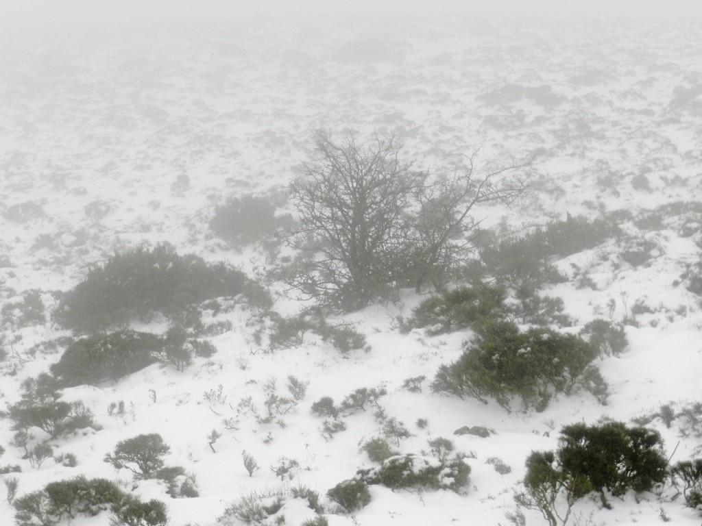 Nebel und tief hängende Wolken erschweren die Sicht