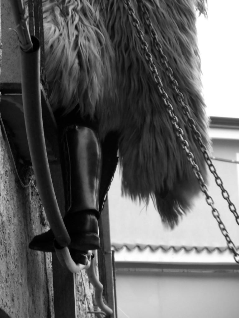 Eine Eisenkette brauchen sie zur Zähmung des wilden Tieres