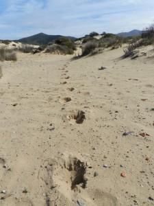 Hufspuren im tiefen Sand