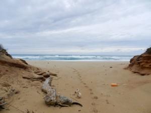 Punta Acqua Durci - auch hier Müll