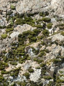 Moosbewachsene Felswand