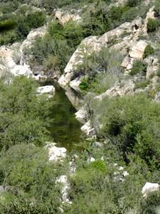 Grünes (kaltes) Wasser im Rio Cannas