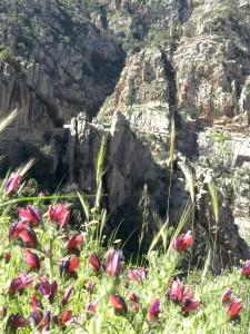 Eine Wiese, ein Tal, ein Berg ... und bis auf wenige Motorengeräusche der Vorbeifahrenden viel Stille zum Abschalten