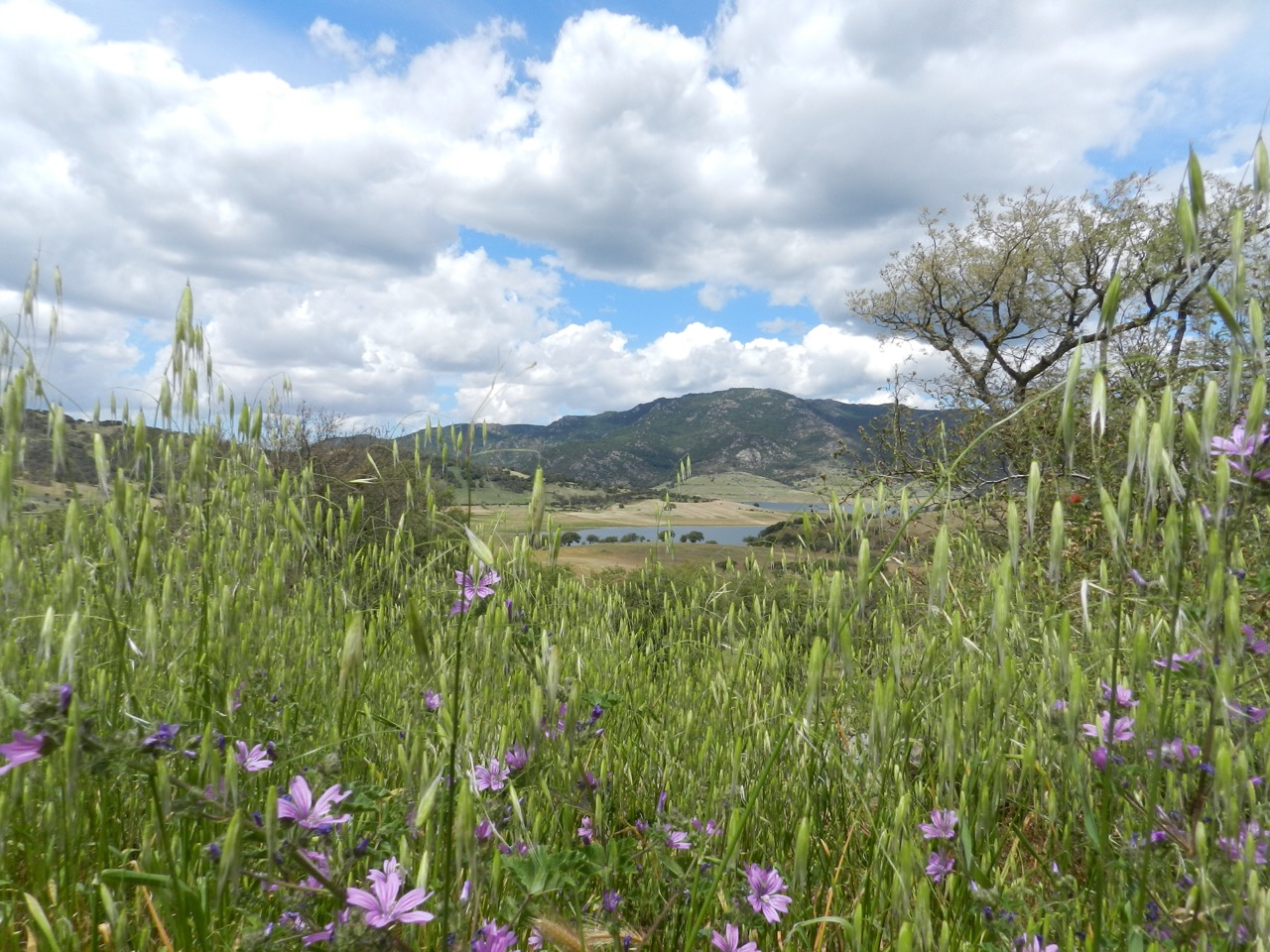 Wiese am Lago Lerno