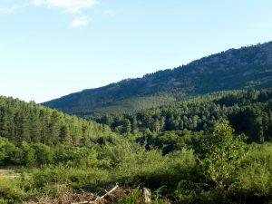 Arzana, Wald im südlichen Gennargentu