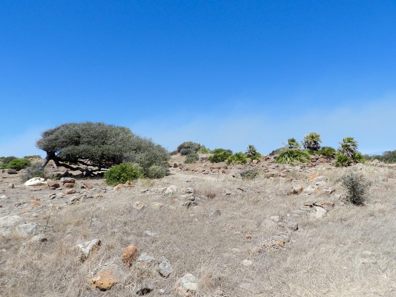 Monte Sirai
