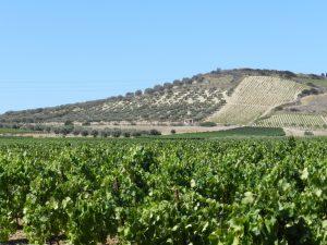 Weinhänge und Olivenhaine bei Dolianova