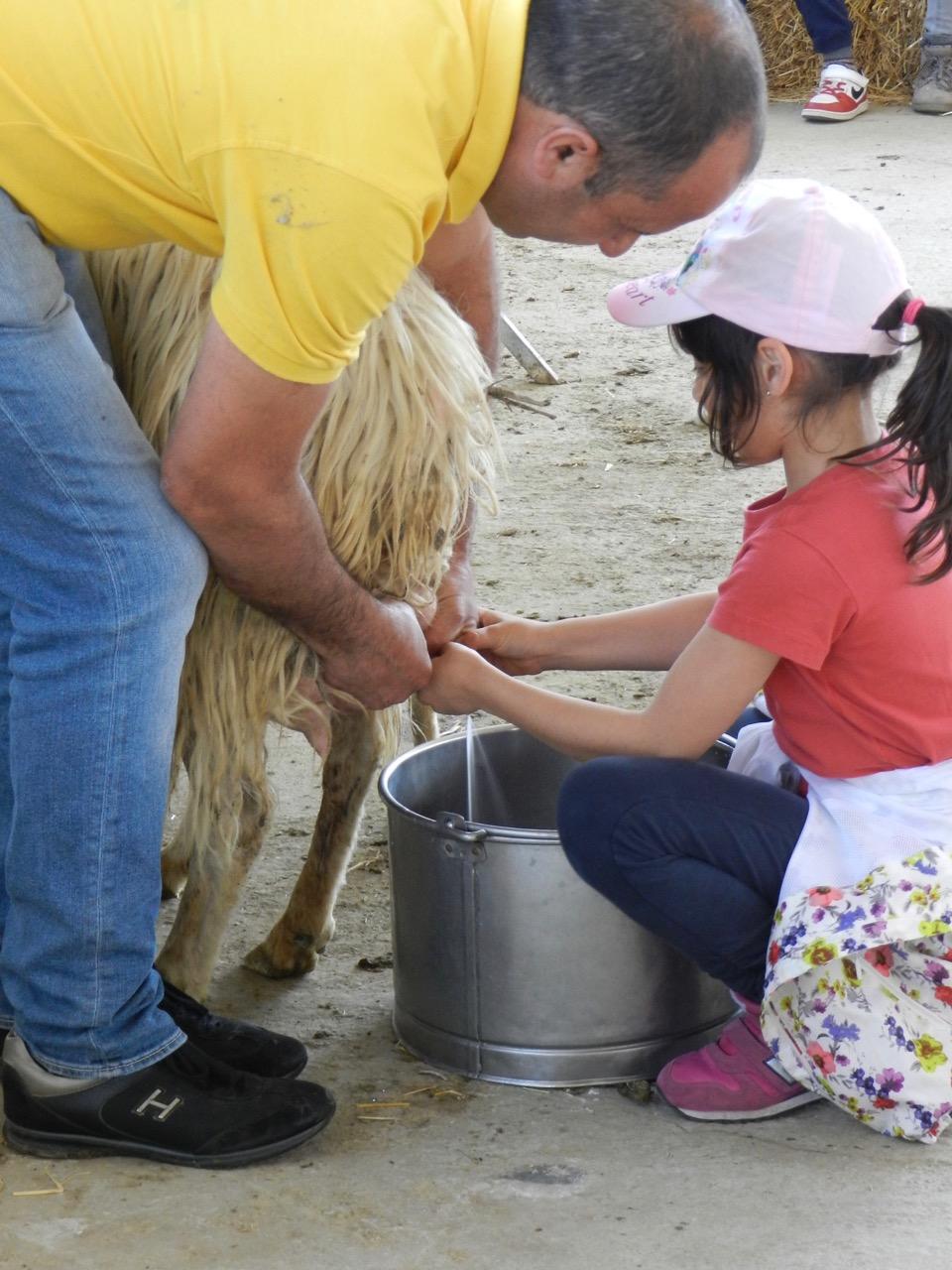 Toll für Kinder: ein Tag oder ein Urlaub auf dem Agriturismo