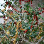 Weihnachtsbaum mal anders