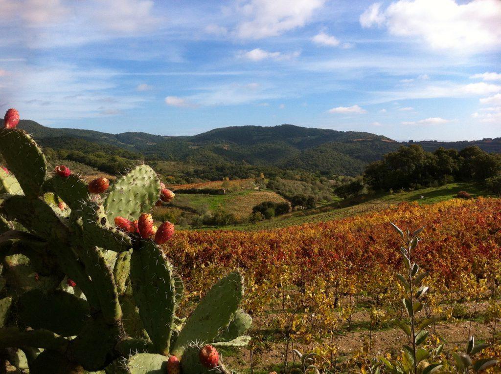Kleiner Weinhang in der Barbagia Mandrolisai nach der Ernte