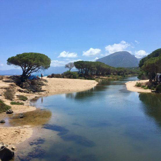 Wunderschöner Stellplatz unterhalb von Pinien bei der Cala Osalla / Orosei