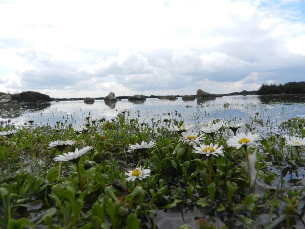 Nur im Frühling: der See Pauli Maiore in beginnender Blüte