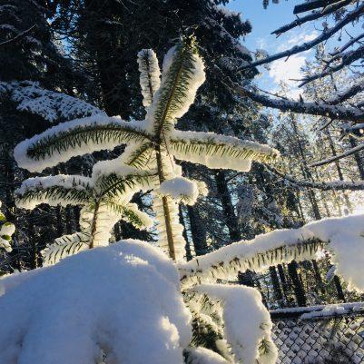 Schnee am Monte Limbara: Ja, ist denn schon Weihnachten?!