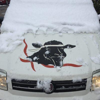 Der Redaktionspanda im Schnee auf Sardinien, hier in Olbia!
