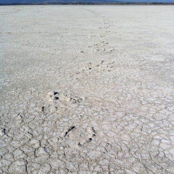 Sommer = Trockenheit und Hitze auf Sardinien (hier: Stagno Porcus Sale auf der Sinis-Halbinsel)