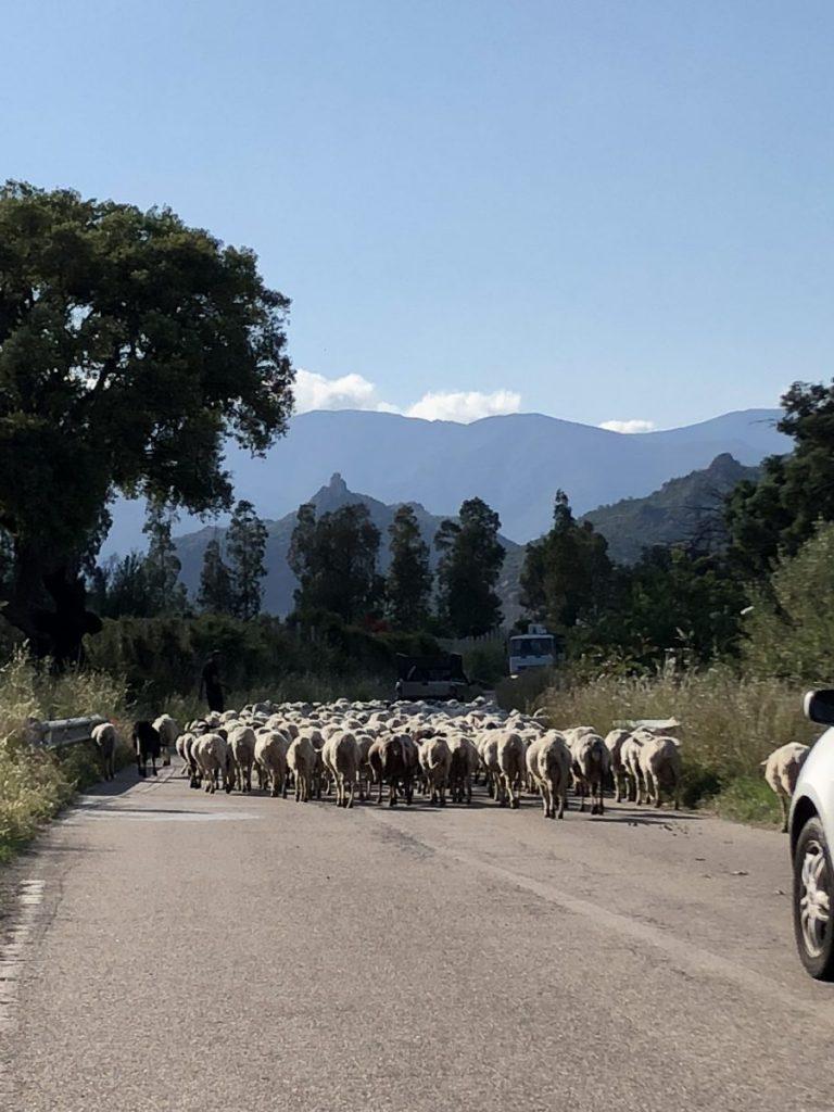 """Wo man Schafe auf der Straße trifft, ist das """"echt sardische nicht weit"""