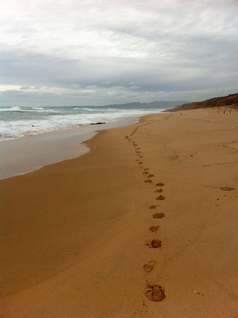 Lonely Wolf? Spuren im Sand bei Scivu.
