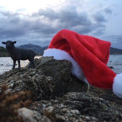 Weihnachten auf Sardinien? Gute Idee, meint das schwarze Schaf!