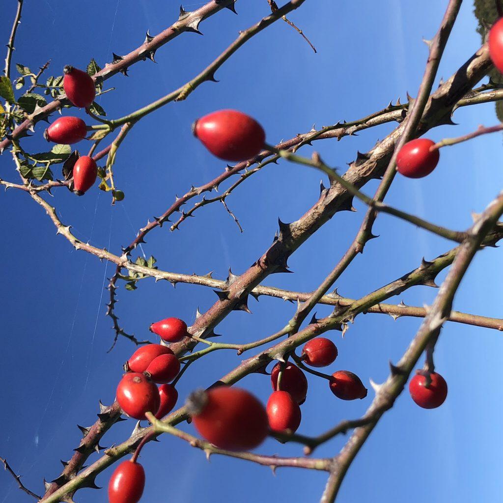 Wenn dir rote Farbtupfer vor blauem Himmel zu Weihnachten reichen, dann komm nach Sardinien!