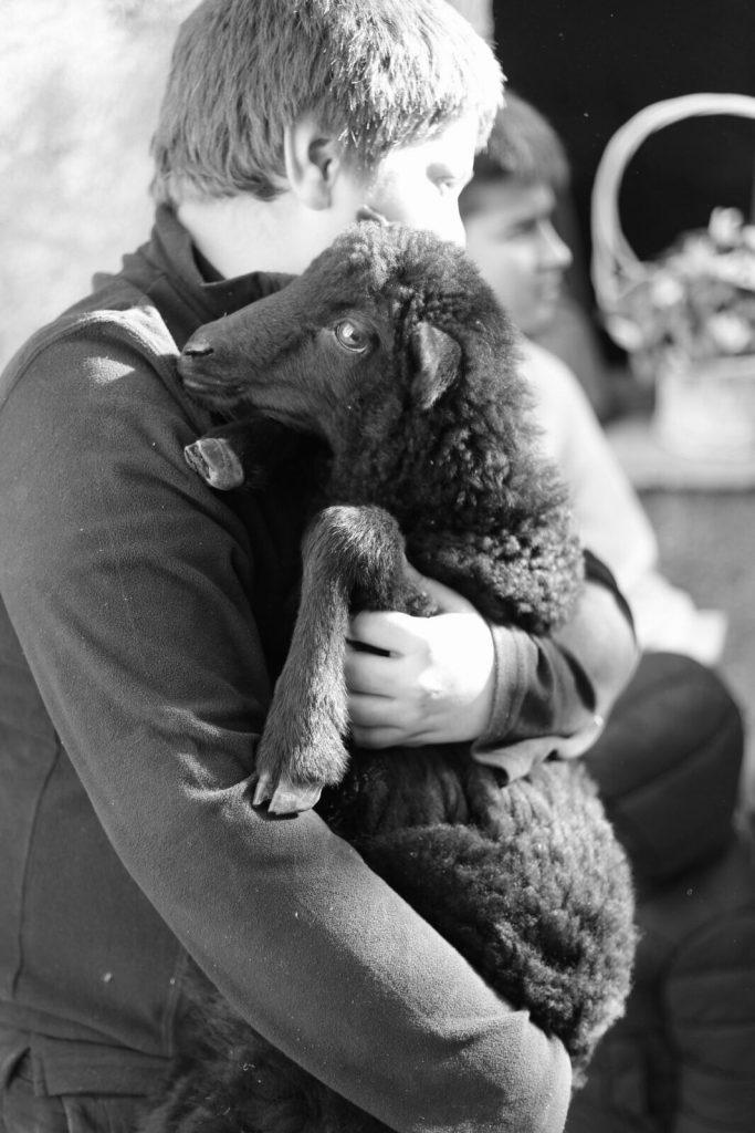 Ein Lamm, ein Leben hat einen Wert. Und der ist deutlich höher als 7 Euro / kg.