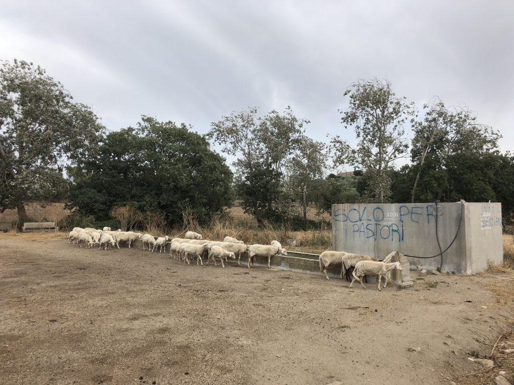 Solo per pastori - nur für Hirten: Das Wasser dieser Tränke ist den wenigen Schafen auf Wanderschaft vorbehalten