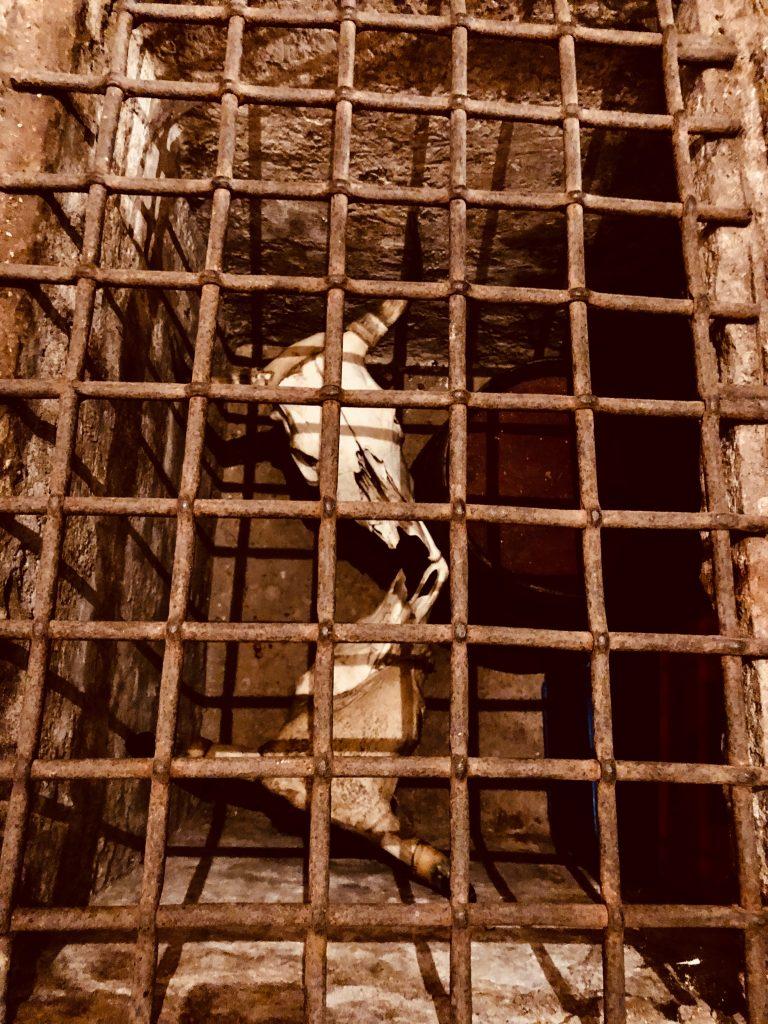 Grusel im Keller: Was sich die beiden Rinderschädel wohl zu erzählen haben?