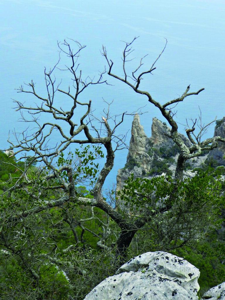Zur Cala Biriala geht es durch die Wildnis