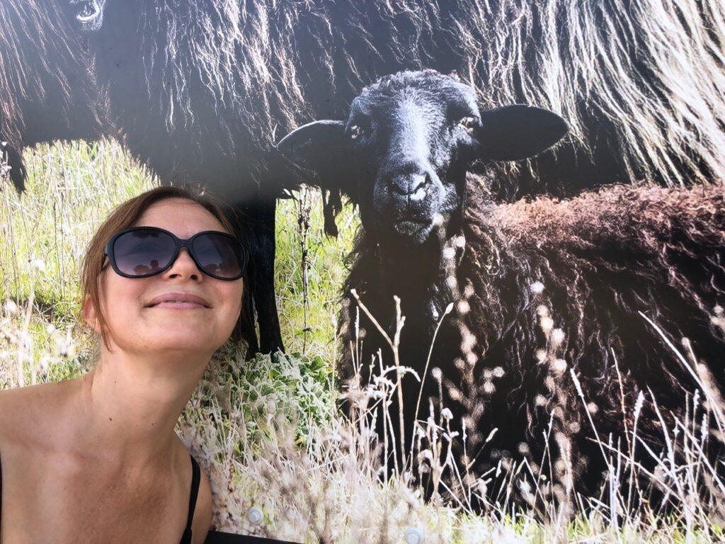 Das schwarze Schaf (hier in Arbus) wünscht einen Covid-freien Urlaub!